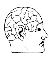 man brain drawing